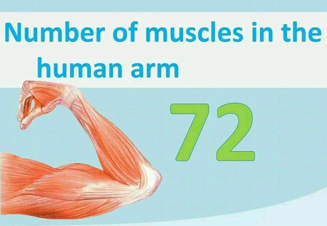 No of muscle in human arm 72