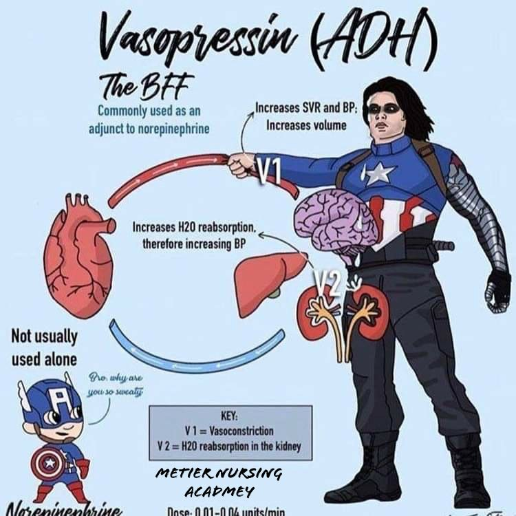 Vasopressin super hero